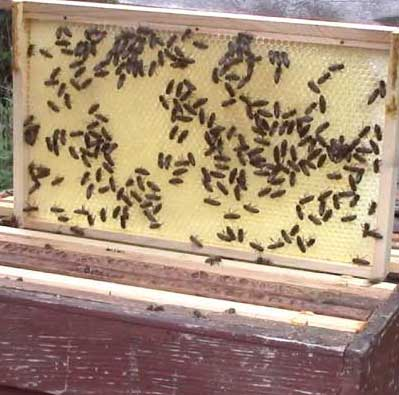 Bees for sale from Norfolk Honey 2018